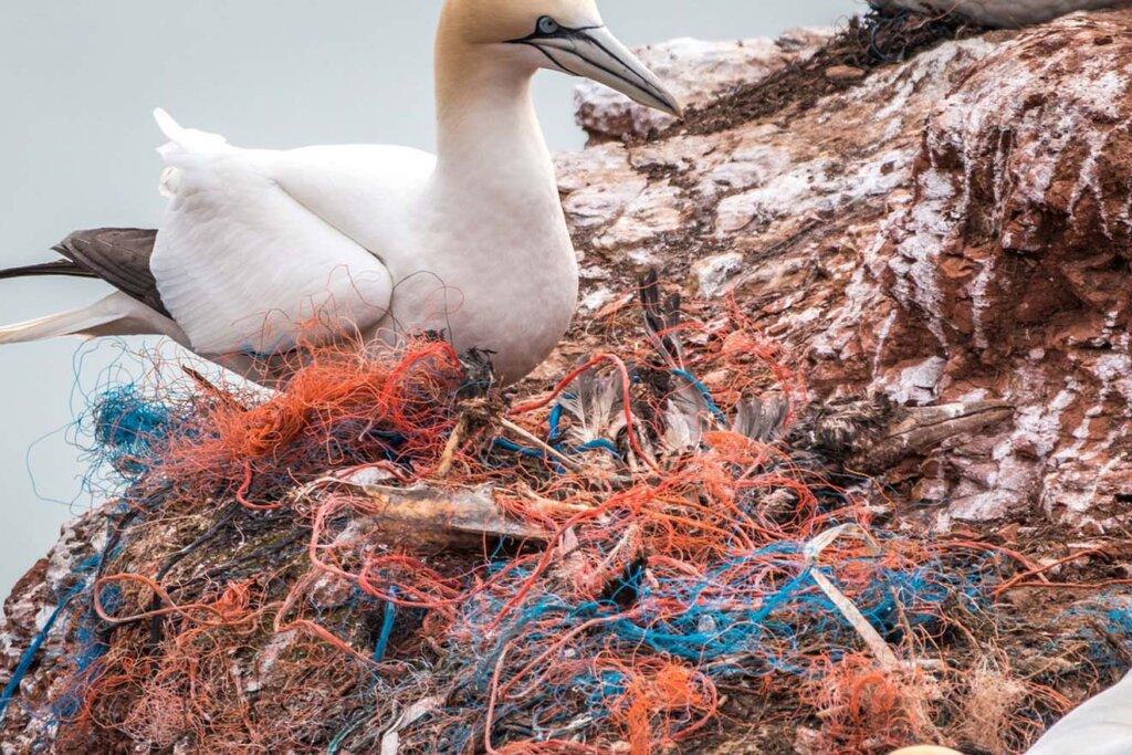 Vogel in Müllschnur gefangen