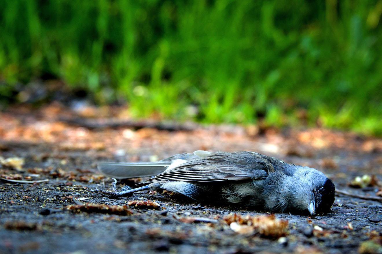 Artensterben: Warum sind so viele Tierarten vom Aussterben bedroht?