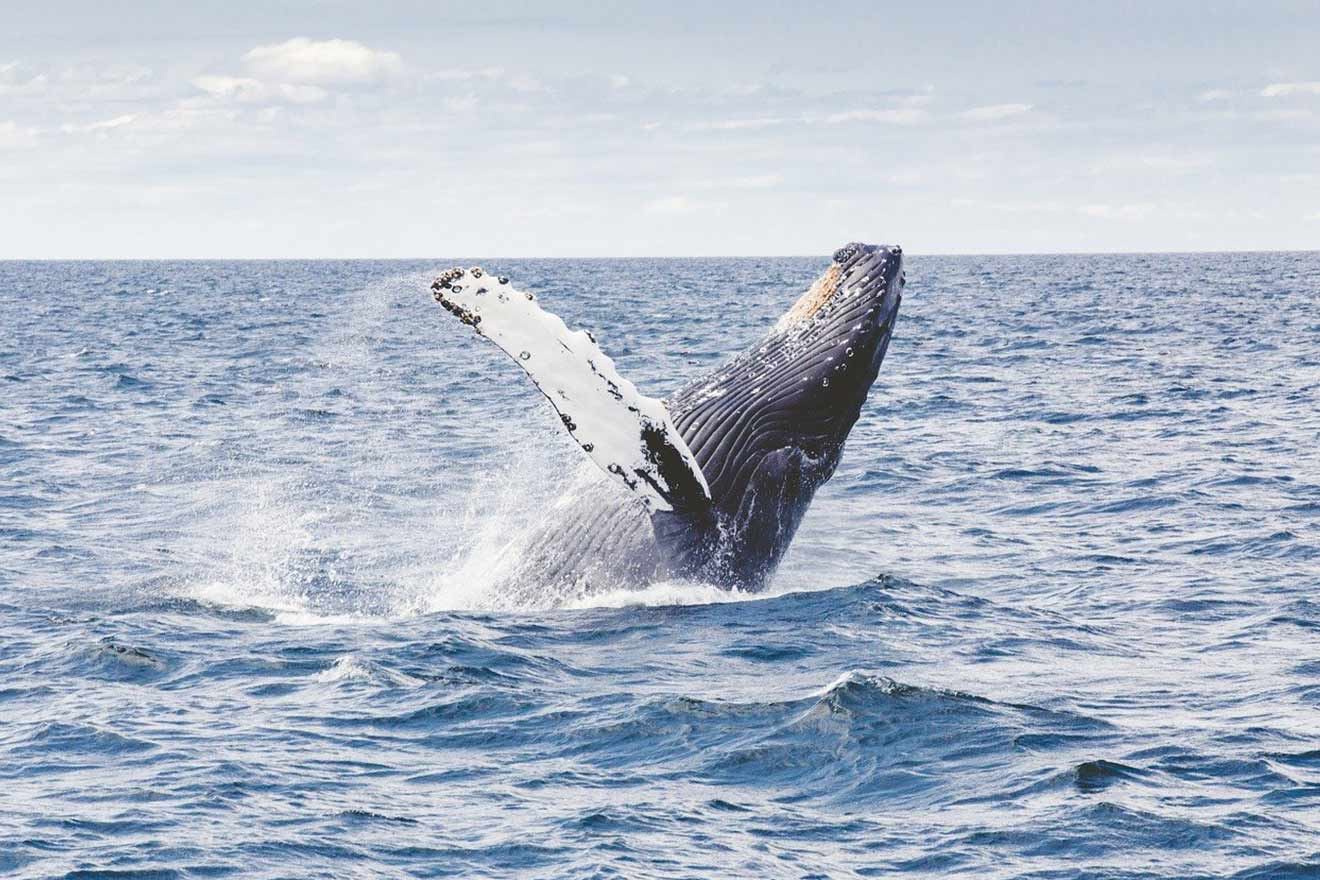 Walfang: Die Jagd auf Wale ist brutal und völlig unnötig