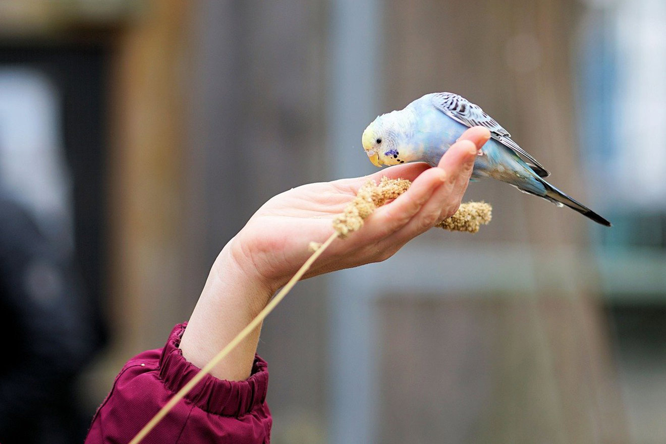 Vogelhaltung: 10 Tipps für die Haltung von Wellensittich & Co.