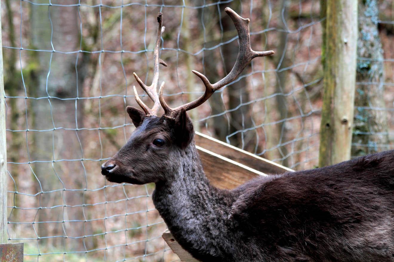 Darum sind Wildparks keine tierfreundliche Zoo-Alternative