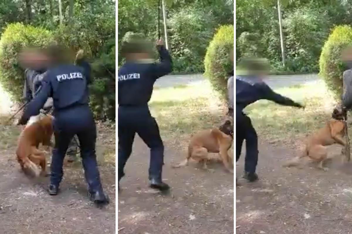 """""""Nochmal!"""": Polizisten schlagen Hund in der Ausbildung"""