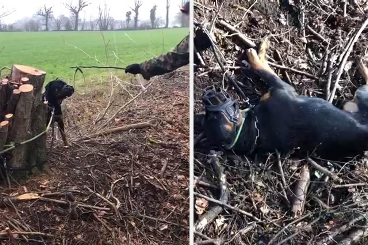 """""""Gib auf oder ich töte dich"""" – PETA zeigt Hundetrainer an"""