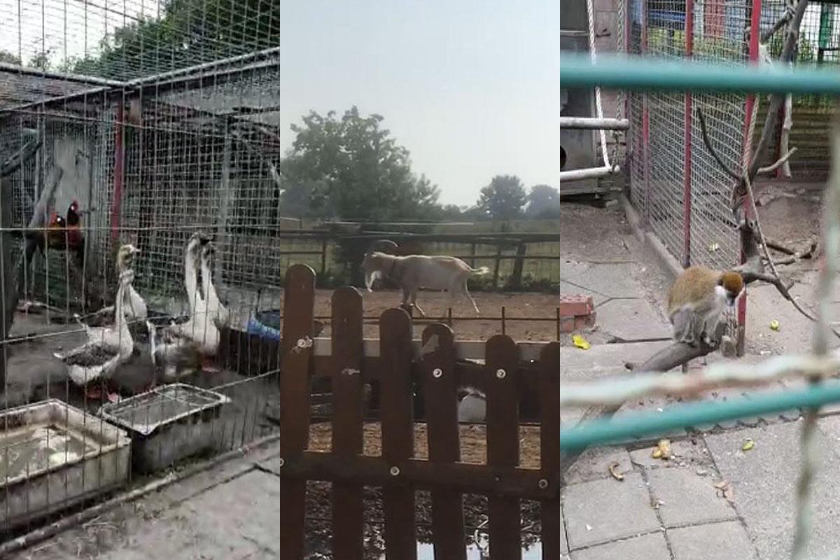 Über 60 verwahrloste Tiere aus Privatzoo in Nauen gerettet