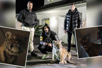 Collage Kollegah mit Rappern und Tiger
