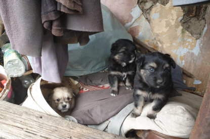 Verlassene Hundewelpen