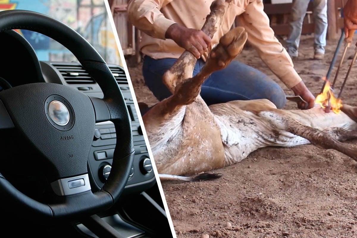 Aufruf an Automarken: Vegane Innenausstattung als Standard