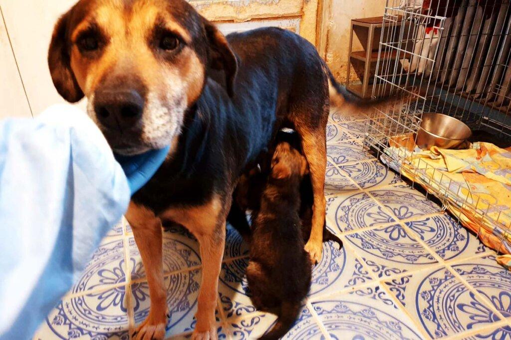 Hund Gessy mit Welpen
