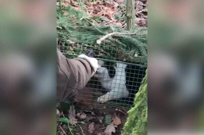 Person haelt Waffe vor das Gesicht einer Katze in einer Lebendfalle