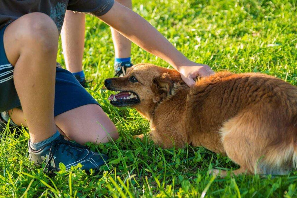 Kind fässt Hund an den Nacken
