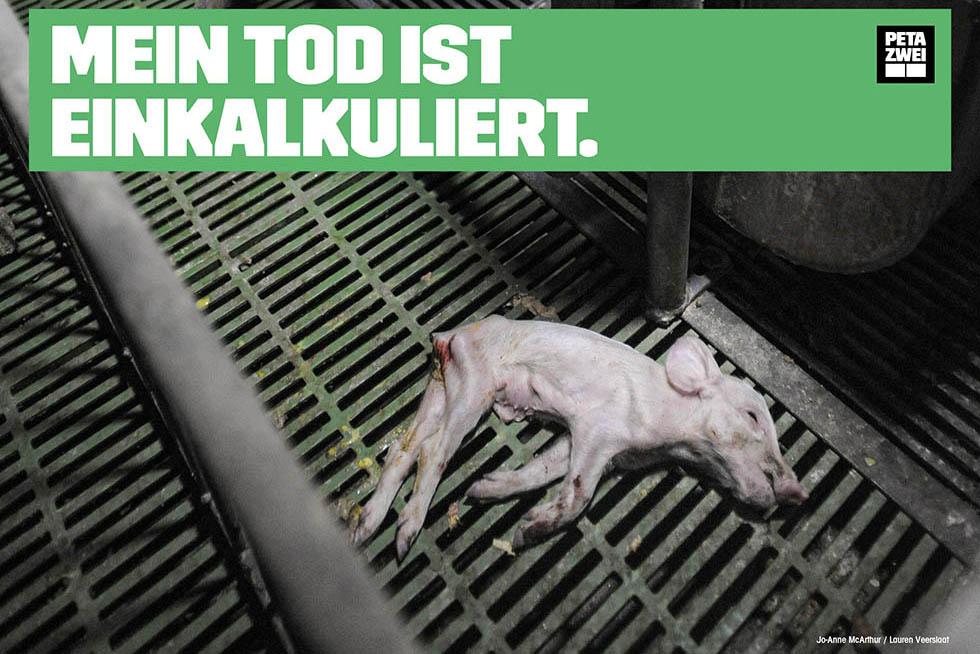 Ihr Einsatz gegen das Leid der Schweine – jetzt kostenloses Demopaket bestellen!