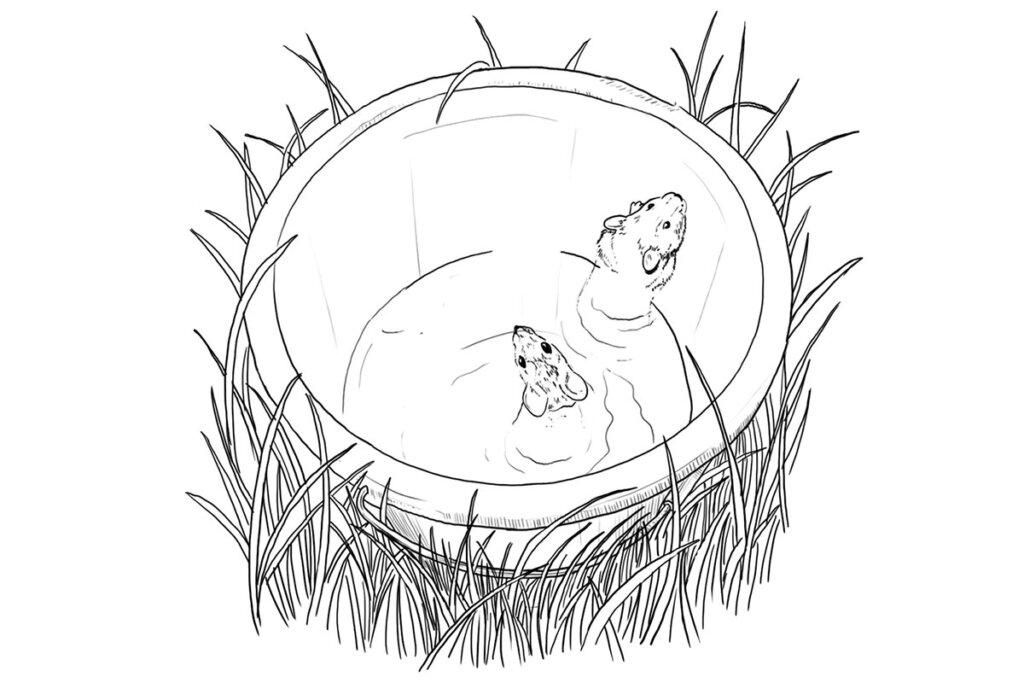 Zeichnung Mäuse gefangen in einer Wasserfalle