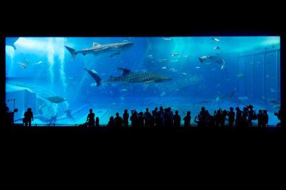 Haie in einem Aquarium