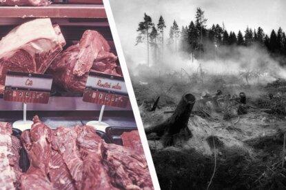 Collage Fleisch und Waldbrand