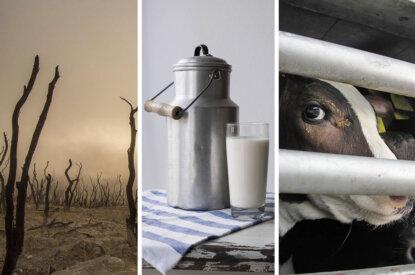Collage Milch und Kuh