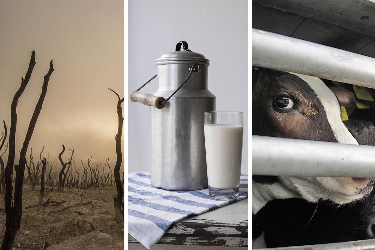Aktuelle Kenntnisse: Was Sie über Milch wissen sollten