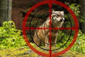 Fadenkreuz auf Wolf