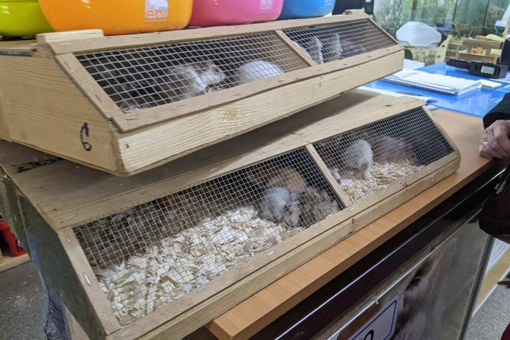 AUfbewahrung Hamster Zoohandel