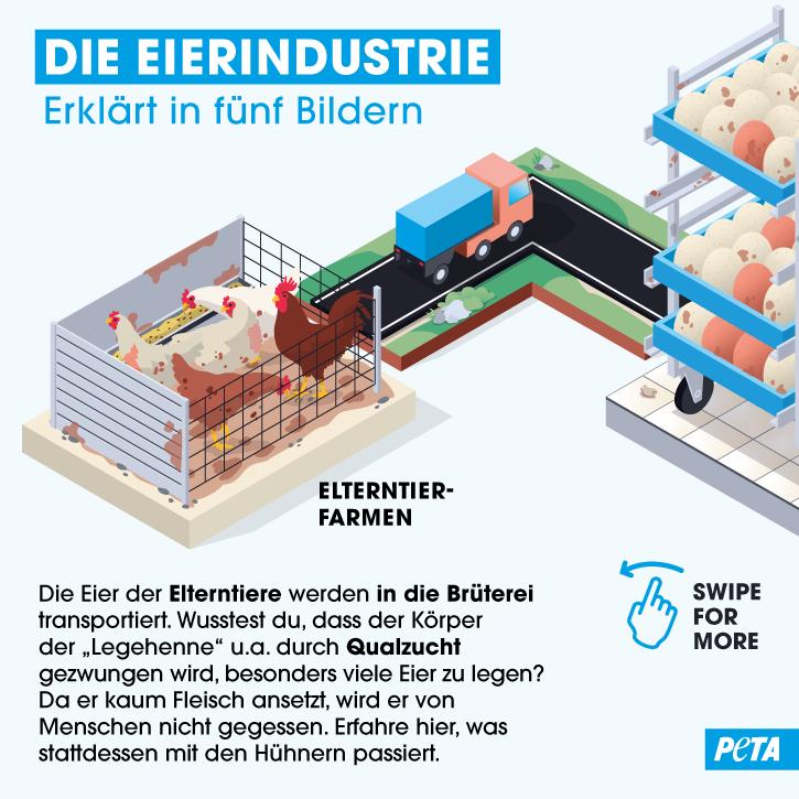 Grafik Die Eierindustrie
