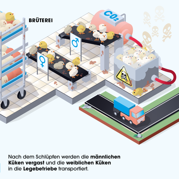 Grafik Brüterei
