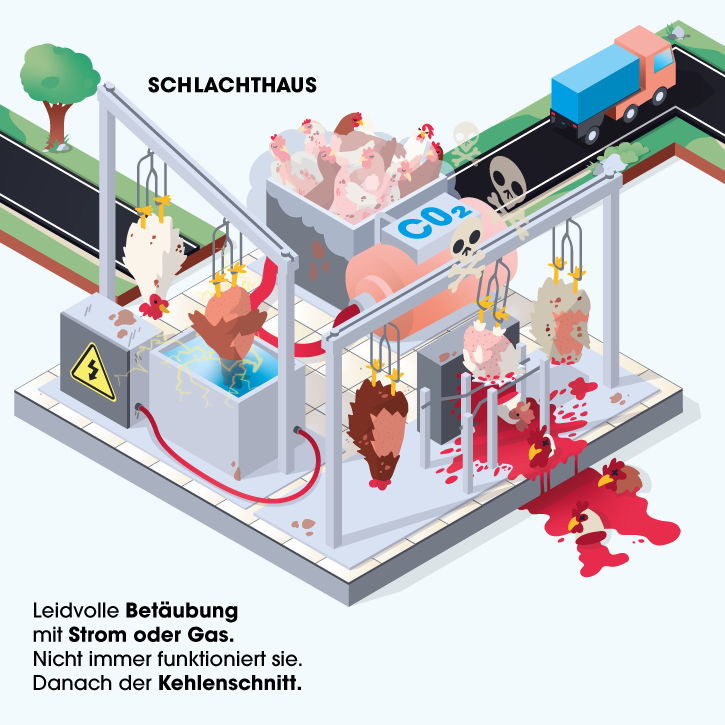 Grafik Schlachthaus
