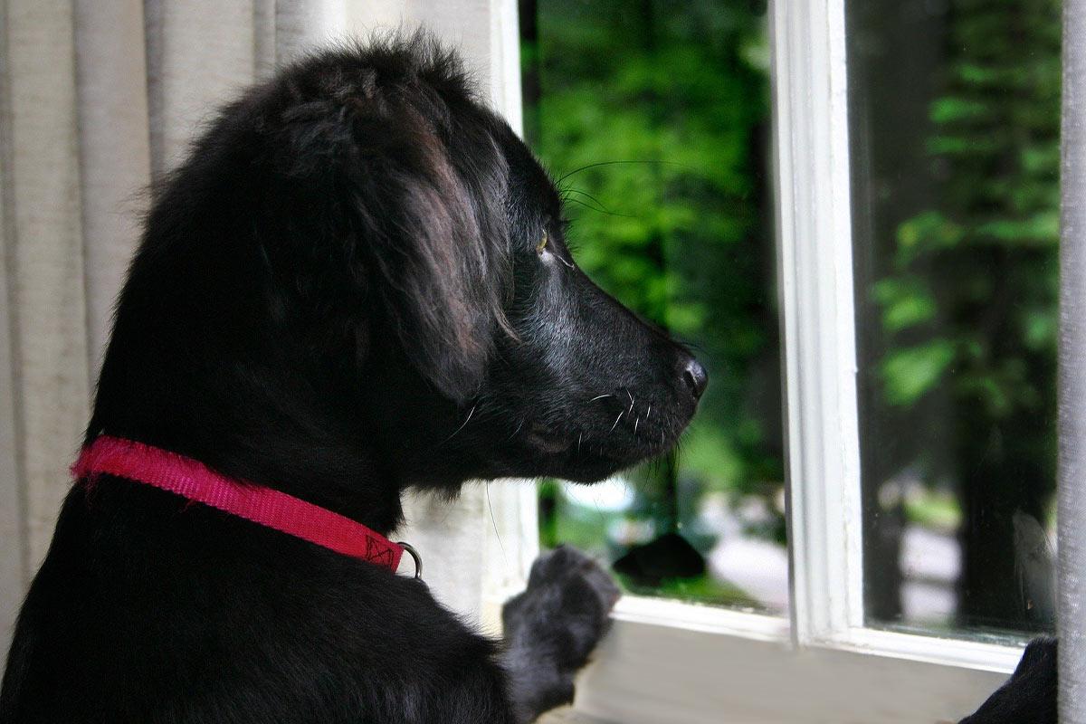 Haustiere nach dem Lockdown: 10 Tipps gegen Trennungsstress