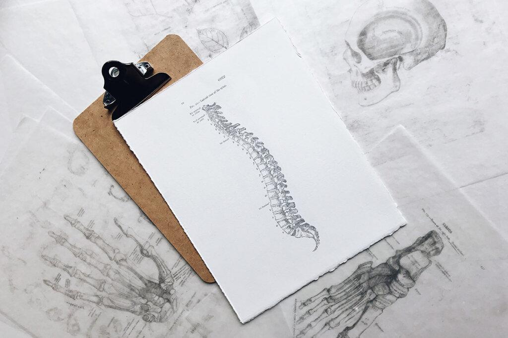 Klemmbrett mit Anatomiezeichnungen
