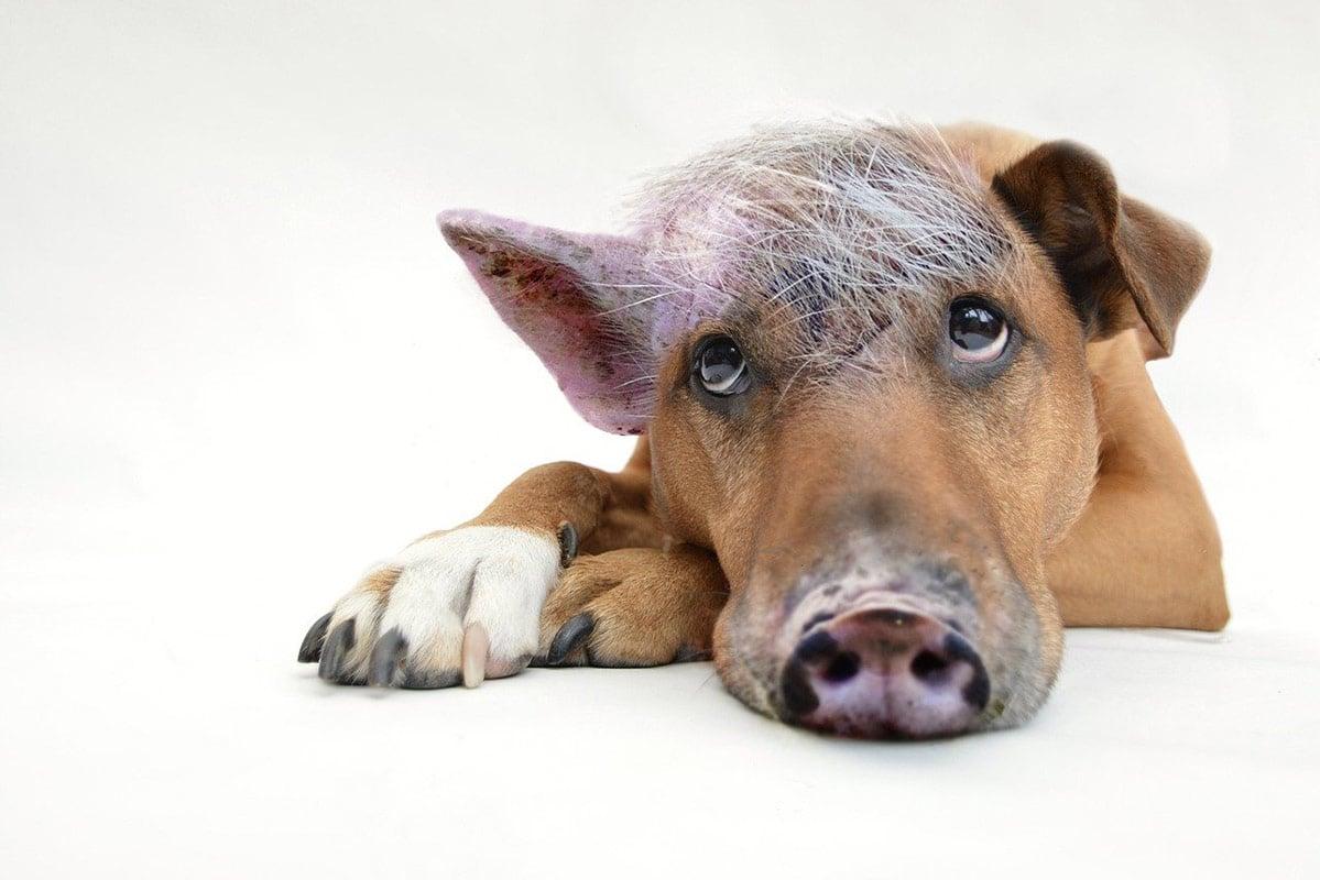 Speziesismus in Redewendungen – 10 tierfreundliche Alternativen