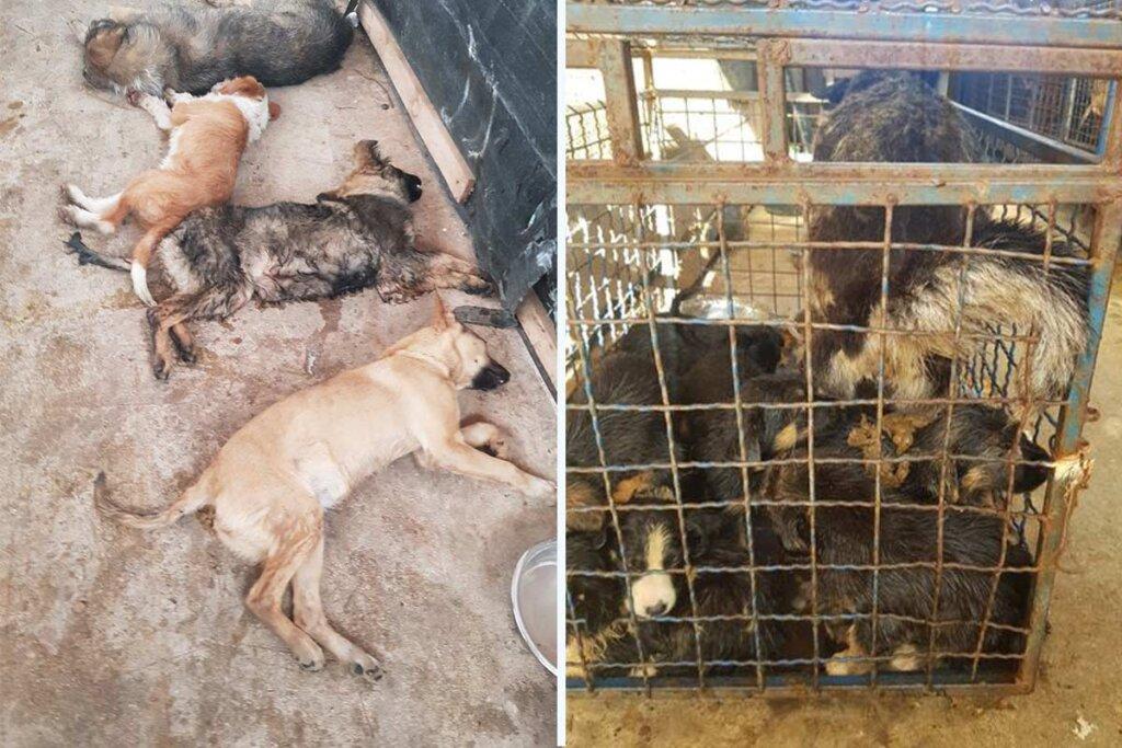 tote Hunde und Welpen