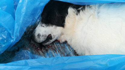 toter Hund im Mülltüte