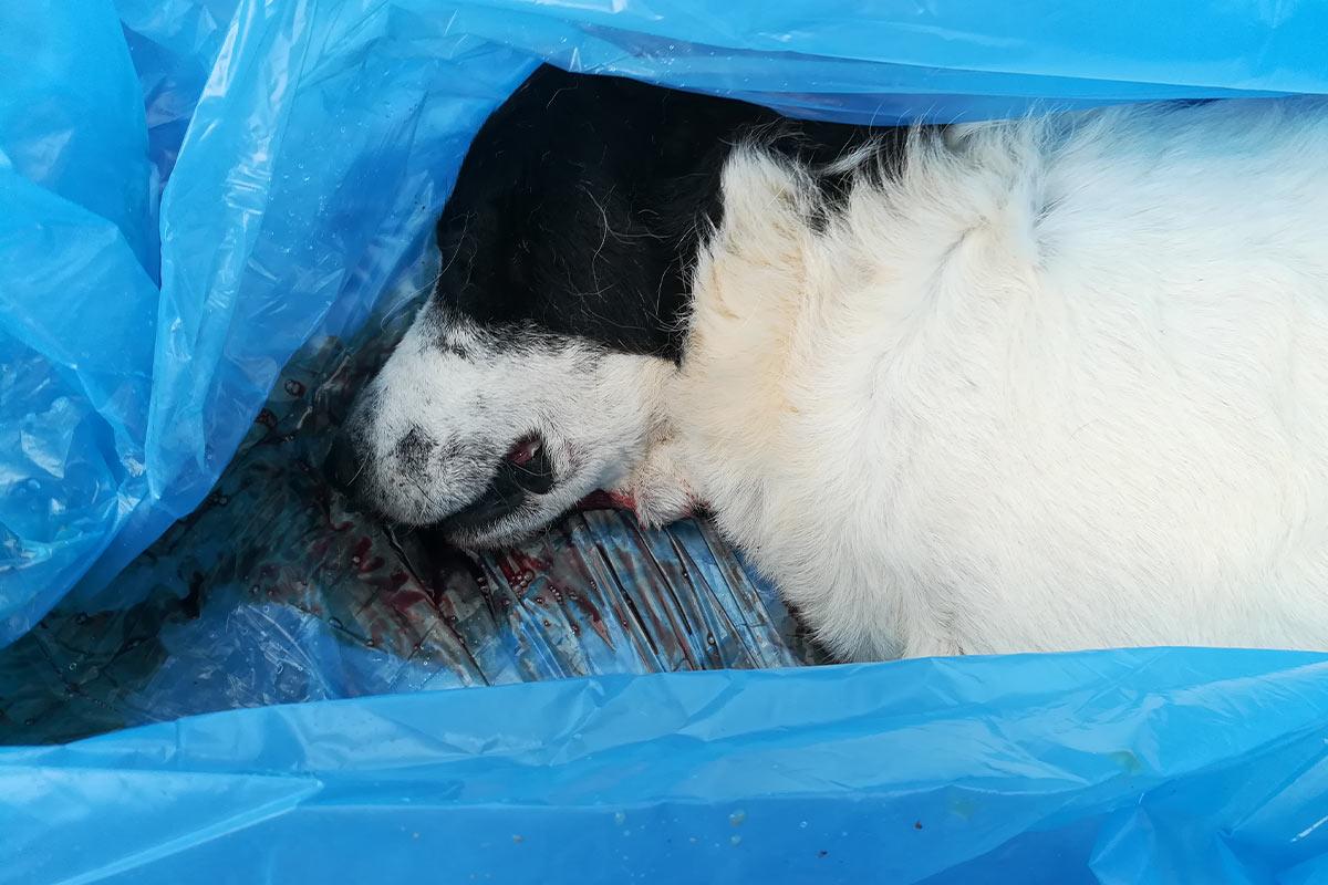 Grausame Zustände im Tierheim ALBA Zenica – helfen Sie jetzt!