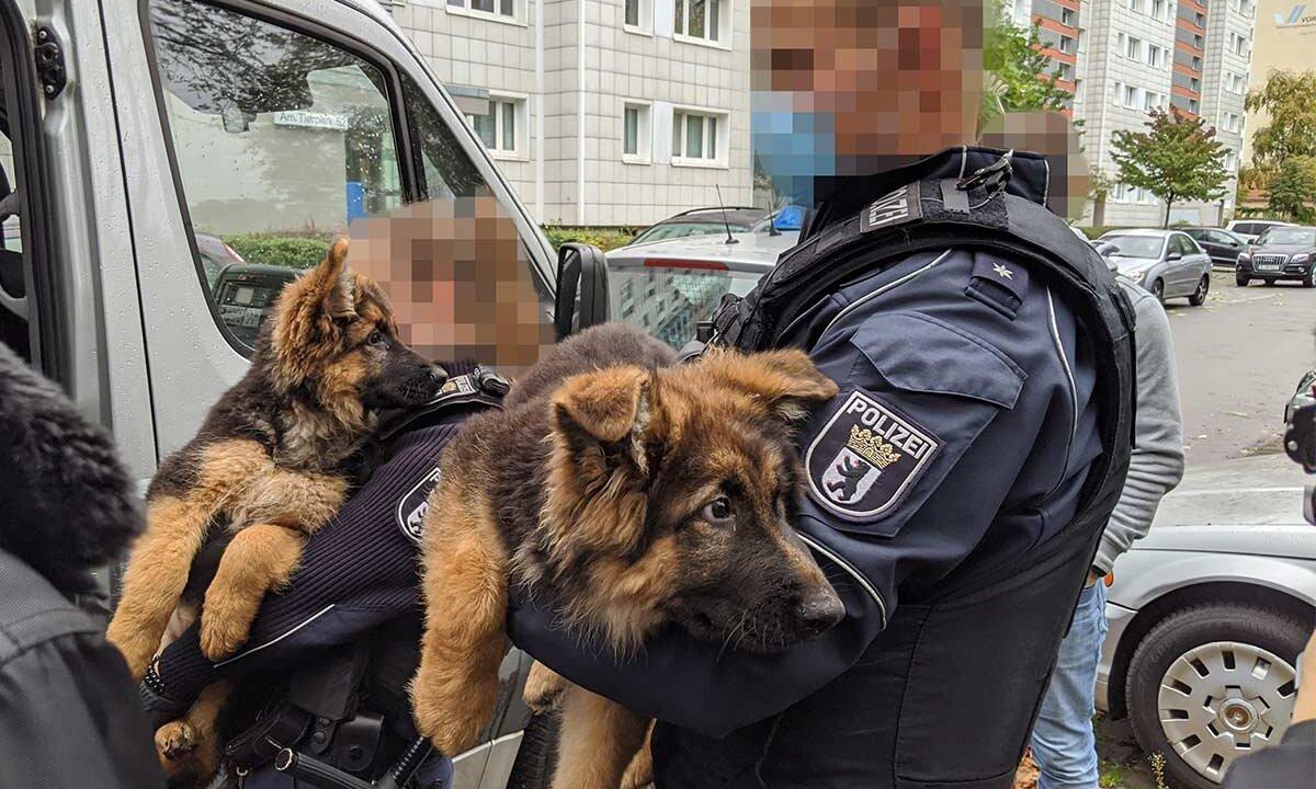 Beschlagnahmte Welpen aus illegalem Tierhandel