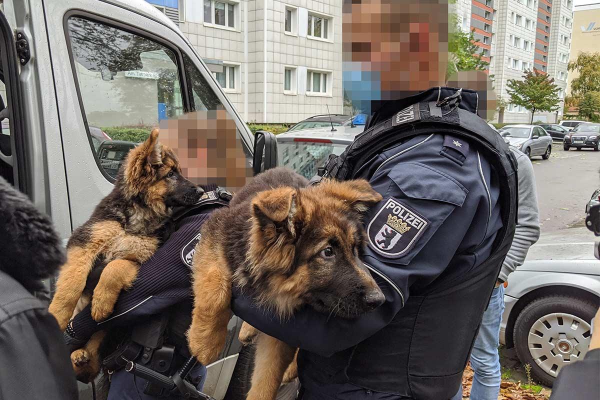 Update: PETA deckt mit Tierschützer und Galileo illegalen Tierhandel auf