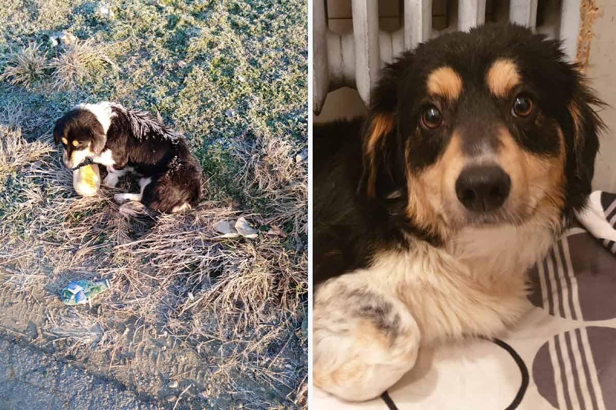 In Eiseskälte überlebt: Samuel, der Wunderhund