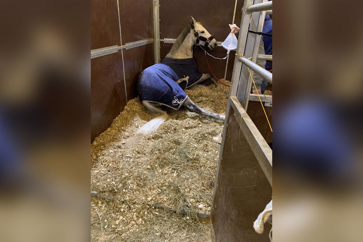 Herpes-Ausbruch auf Springturnier: Mehrere Pferde sterben, zahlreiche infiziert