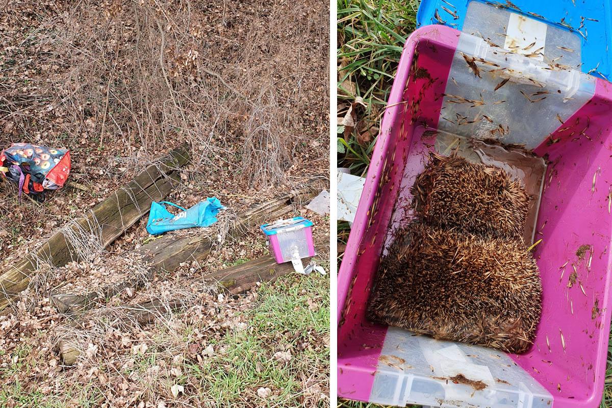 Serientierquäler in der Wetterau: Dutzende verletzte und tote Igel
