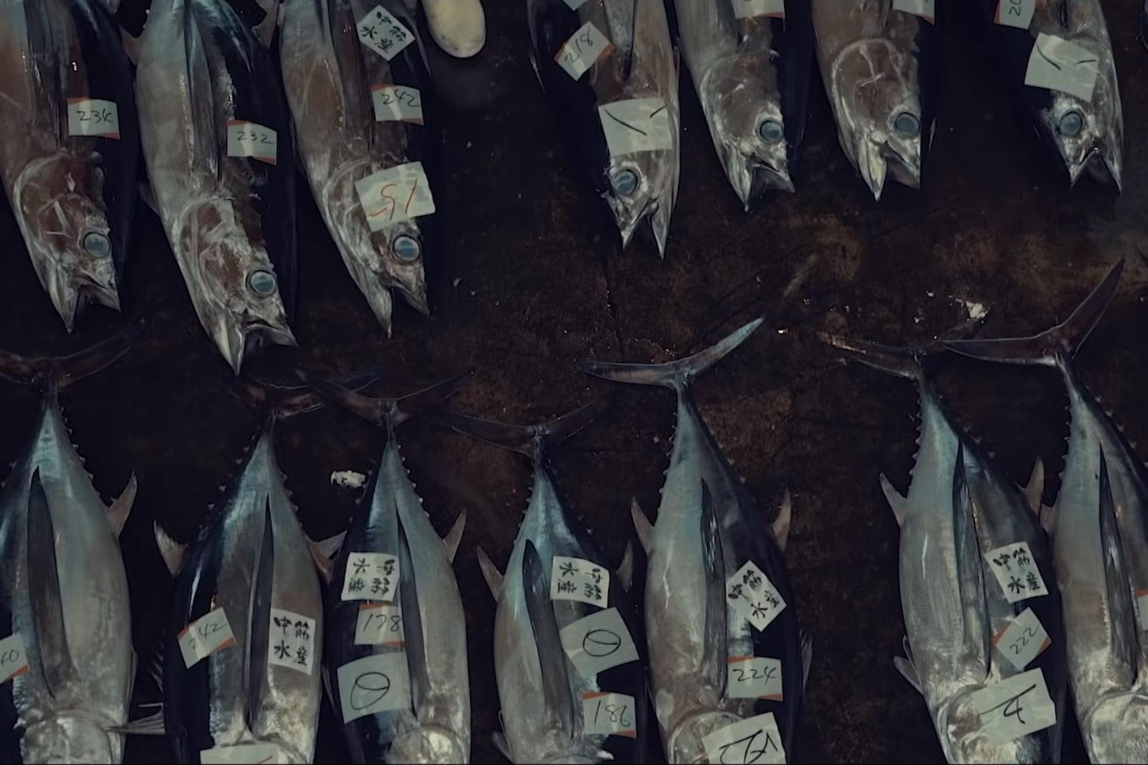 Netflix-Doku Seaspiracy: Wie der Mensch die Meere zerstört