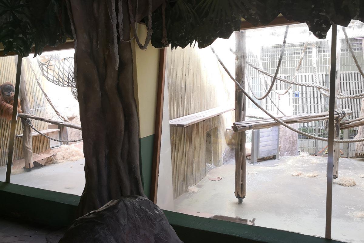 Orang Utan Gehege Dresdner Zoo