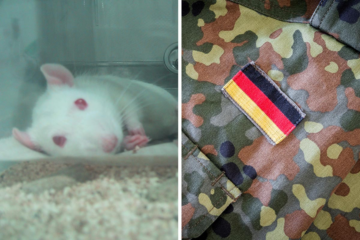 Nervengift und Traumatraining: Tierversuche bei der Bundeswehr