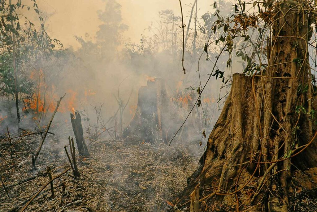 Brennender Regenwald