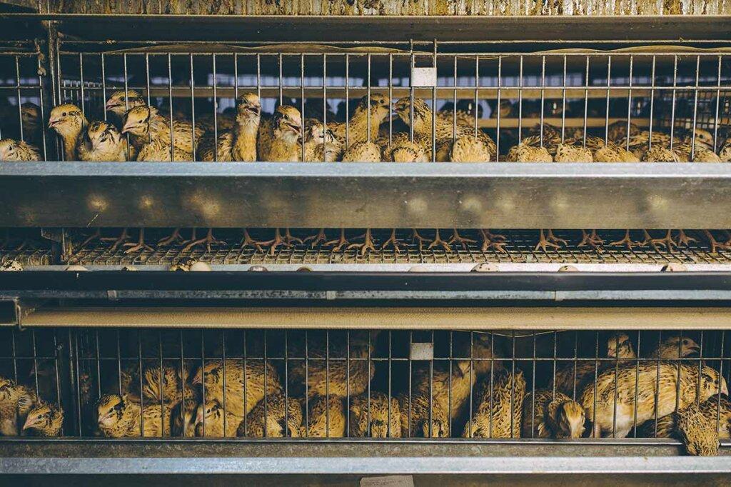 kleine vögel in käfigen