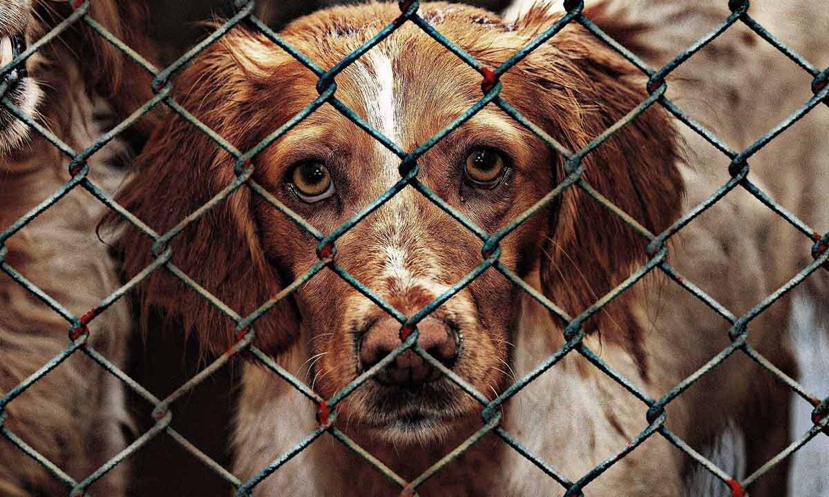 Hund hinter Gittern