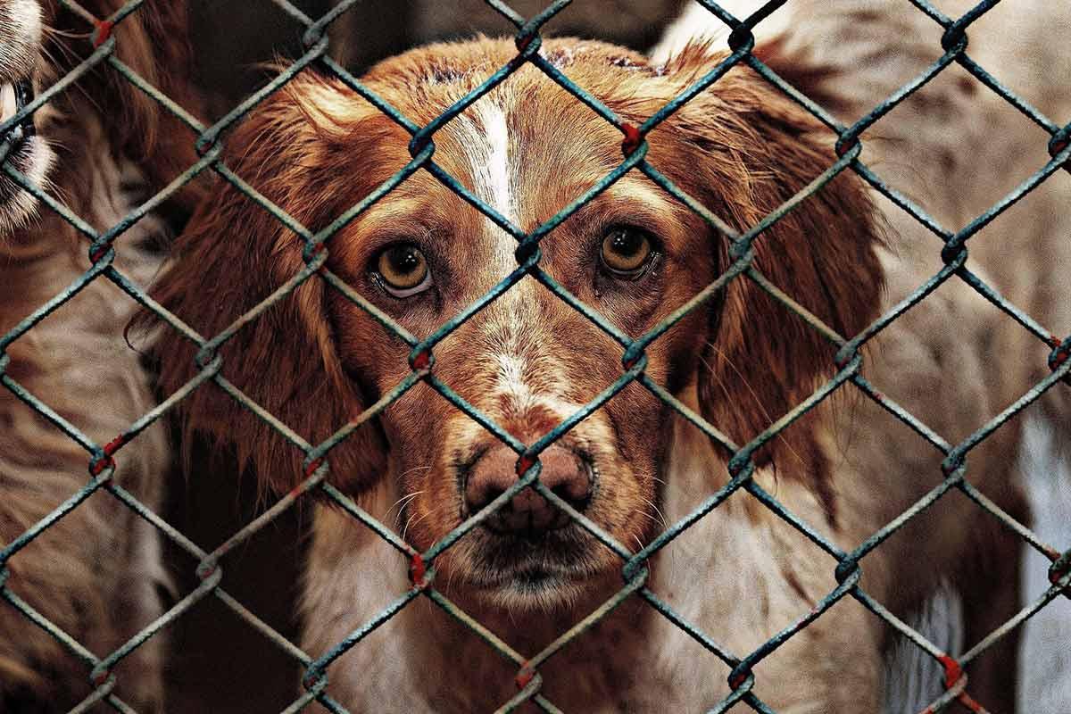"""Hunde aus dem Internet: Immer mehr """"komplizierte"""" Tiere landen im Tierheim"""