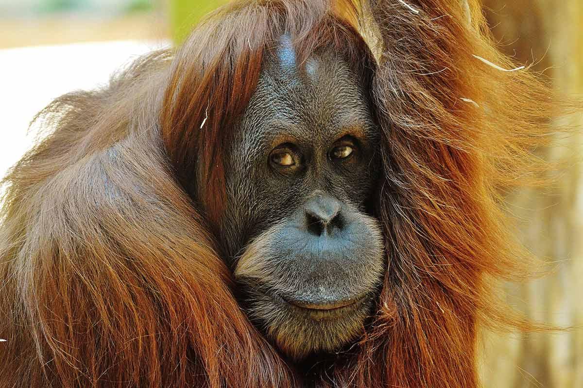 Keine Steuern für Tierleid! Zoo Dresden will neues Affenhaus