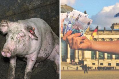 Schwein links und rechts eine Hand mit Geld