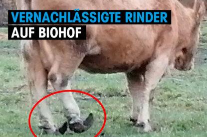 bio rinder rostock