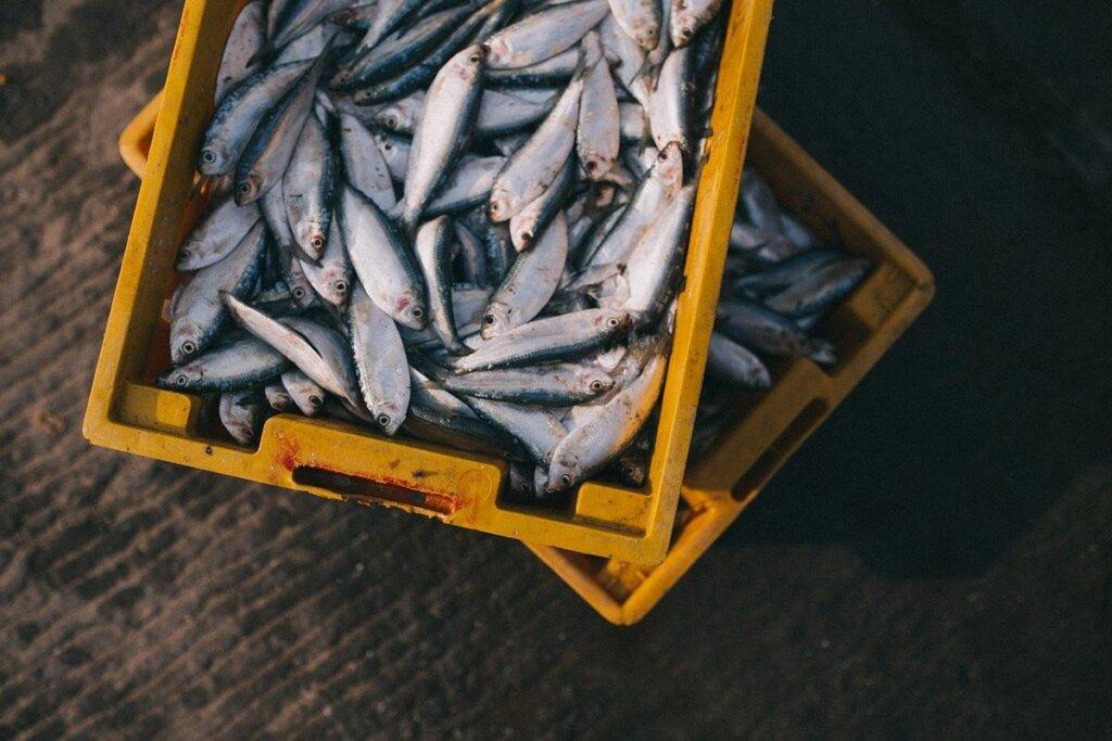 Kaesten mit toten Fischen