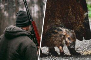 Collage Jäger Wildschwein