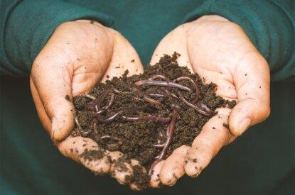 Hände halten Regenwürmer und Erde