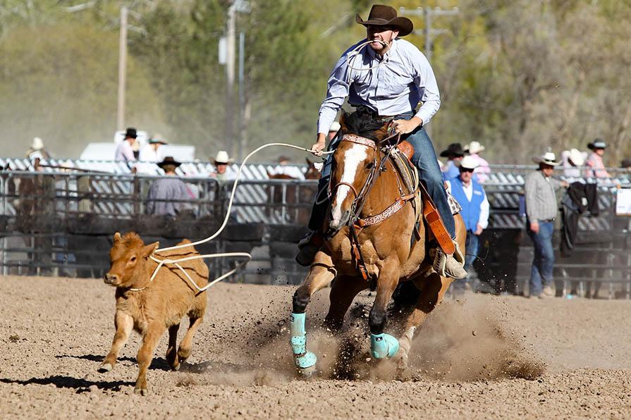 Rodeo-Reiter mit Kalb